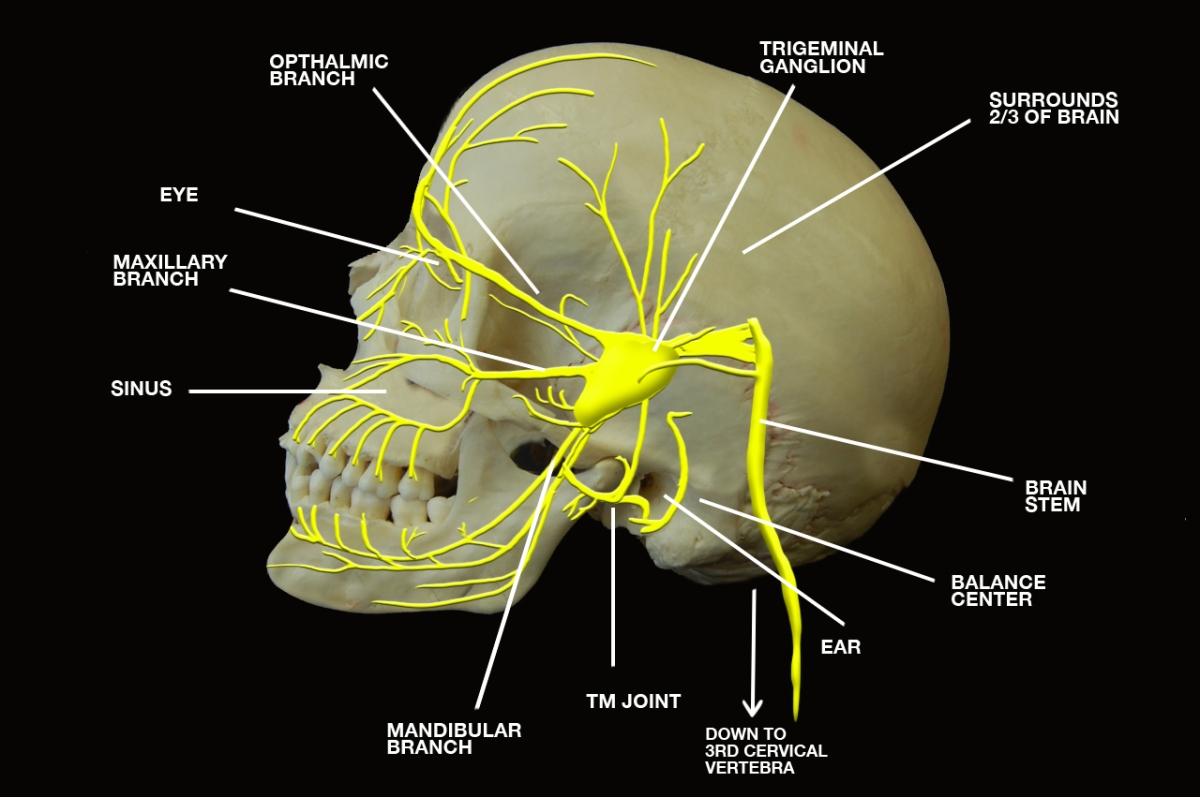 Cranial Nerves   YOUR LIFE CAN CHANGE IN THE BLINK OF AN EYE